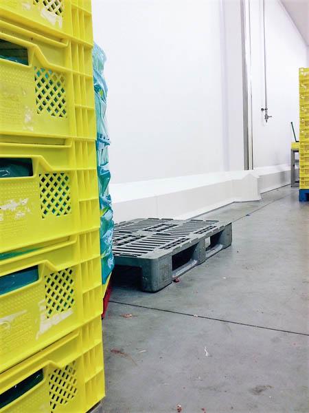Installatie hygiënische wanden en stootranden in slachthuis